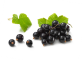 BIO Johannisbeere schwarz